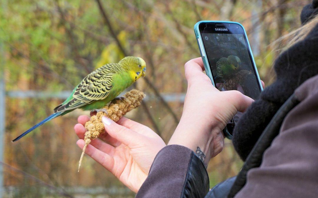 Job Description: Digital Content Coordinator – Animal Shelter