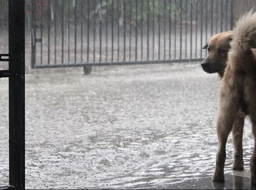 Hurricane Harvey Social Media