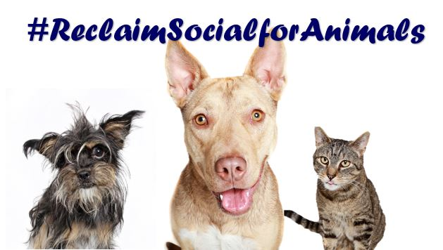 Reclaim Social for Animals