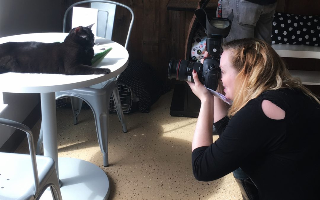 Myths And Facts About Video Production In Shelters And Rescues: Tips for How To Get Better Videos